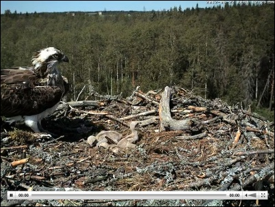 Screenshot Webcam